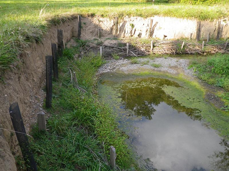 Génie Végétal et plantations - Riou Viou (12)